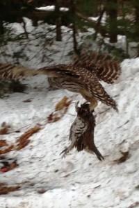 March-Owl#3-FrankHiggins