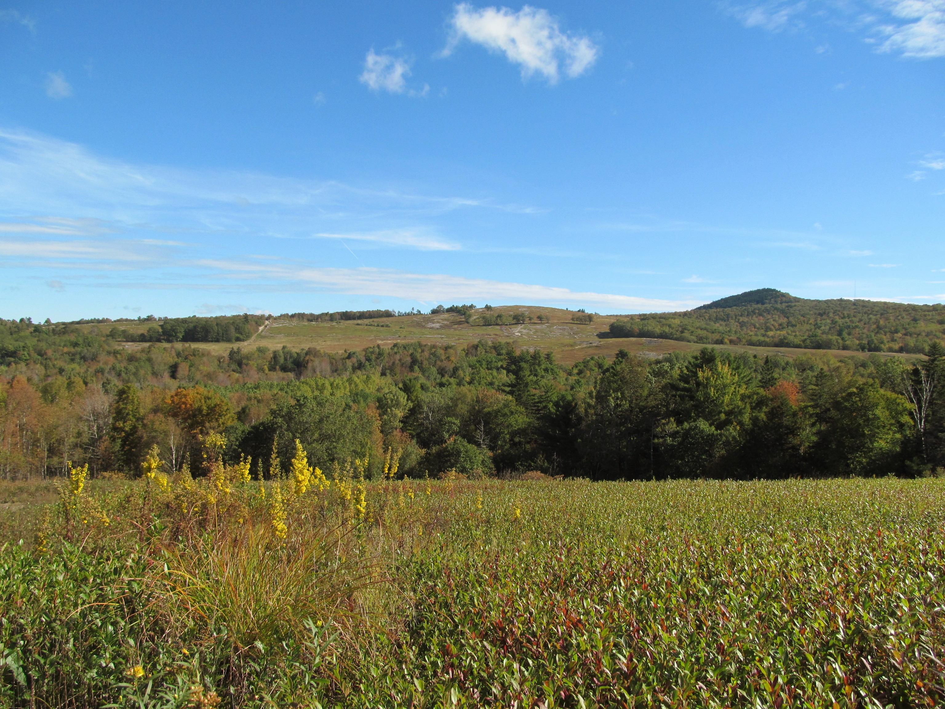 Bucksport blueberry field, forest conserved