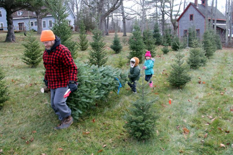Christmas Tree Sale!